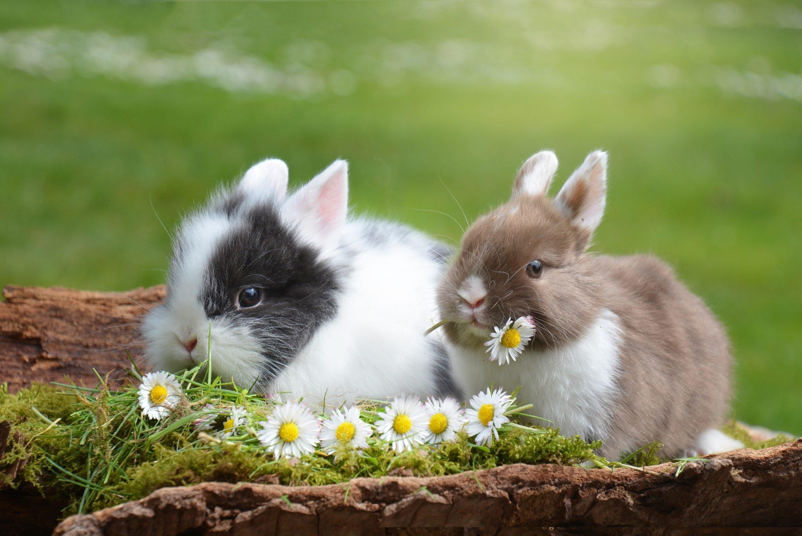 rabbit-2174679
