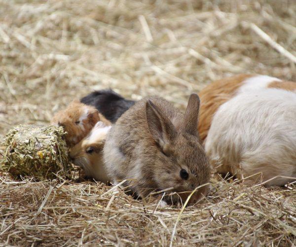 rabbit-5438657